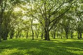 Under The Forest Shadow Bush Lawn And Trees Green Background With Beautiful Lawn poster