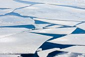 pic of growler  - Frozen sea with many big ice floes - JPG