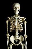 stock photo of sternum  - Human skeleton on a black background - JPG