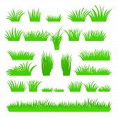Vector Flat Abstract Green Grass Set Isolated On White Background. Spring Big Fresh Grass Kit. Tufts poster