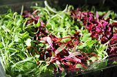 image of endive  - shot of Gorgeous Micro greens fresh isolated