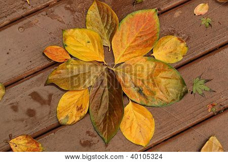 golden persimmon leaves on a wet deck