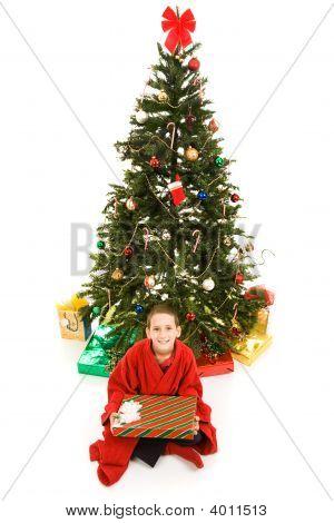 Christmas Tree And Boy