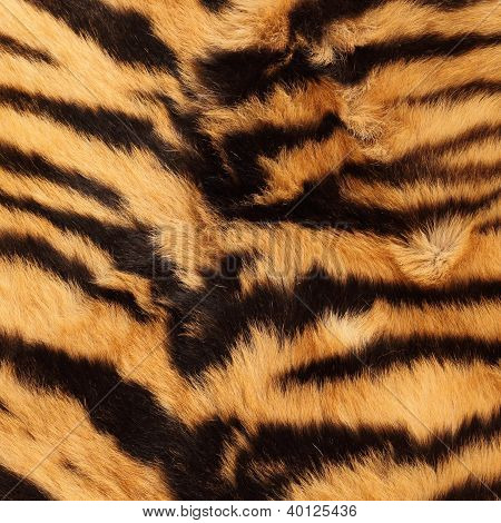 Stripes On A Tiger Pelt