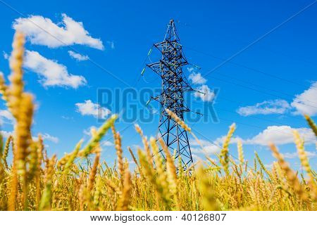 Electrical Powerline And Wheat Field In Summer Day