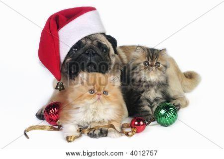 Christmas Dog And Kittens.