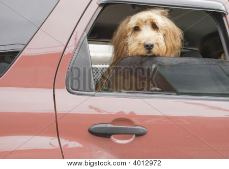 Rücksitz-Hund