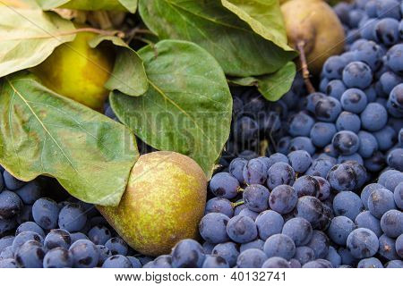 Pears, Grapes And Green Leaves Background