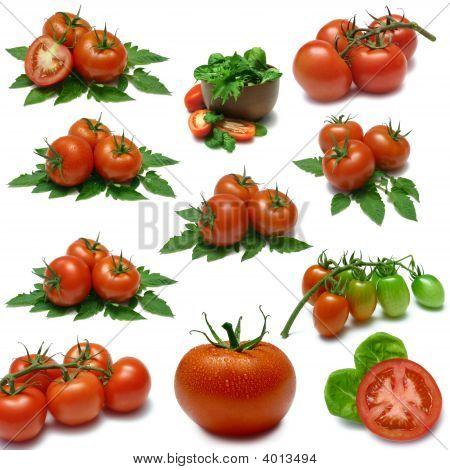 Tomato Sampler