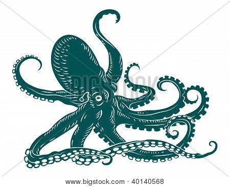 Octopus with tentacles