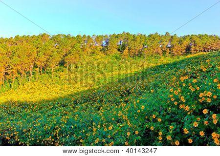 Mountain pine garden flowers at thailand
