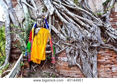 Buddha Covered By Roots In Temple Area Wat Phra Si Sanphet