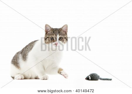 Cat Batting At A Toy Mouse With Its Paw