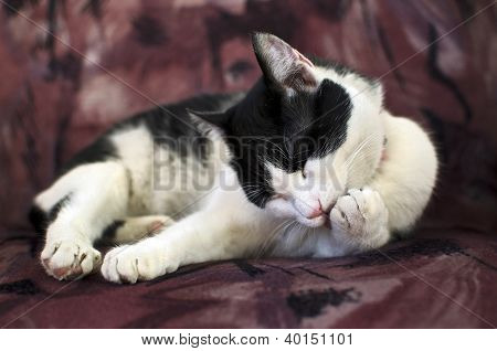 Domestic cat cleaning its paws in a confortable armchair