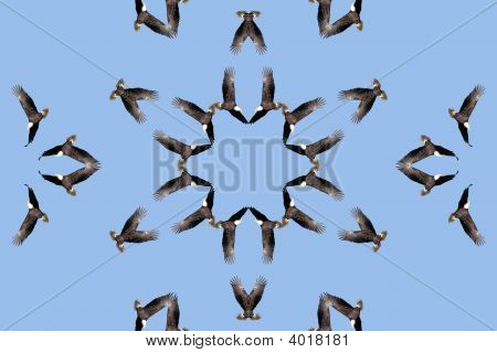 Kaleidoscopic Bald Eagle