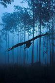 Raven Flying Through Night Forest