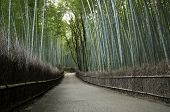picture of grass area  - Bamboo grove in Arashiyama in Kyoto Japan near the famous Tenryu - JPG