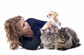 image of coon dog  - portrait of a purebred maine coon cats chihuahua and woman on a white background - JPG