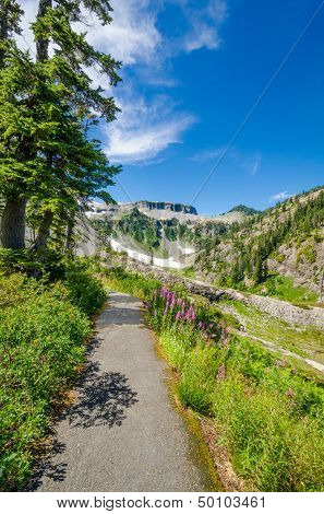 Fragment of Bagley Lakes Trail at Mount Baker Park in Washington, USA