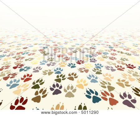 Paw Floor
