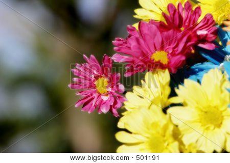 Daisy Flowers Sunshine
