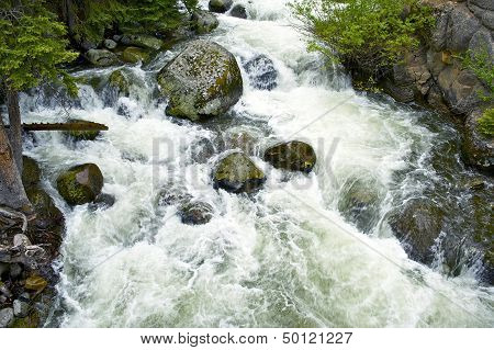 Wyoming Forest Stream
