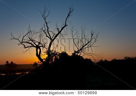 Silhouette Of Bare Tree At Dawn