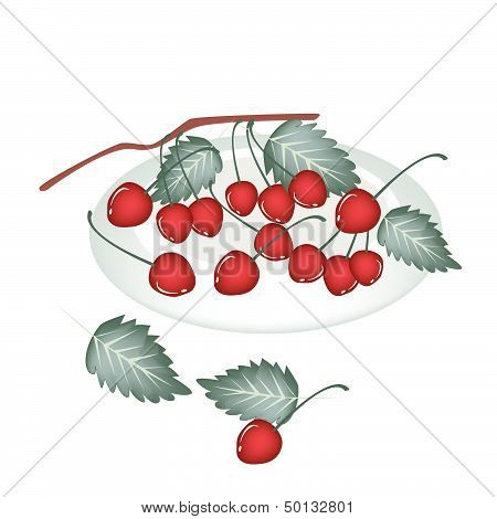 A Plate Of Red Cherries Isolated On White