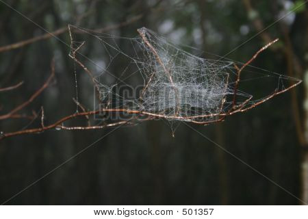 Messy Spiders Wed