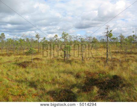 Bog Scenery
