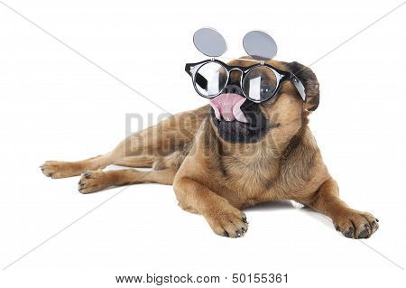 Dog with glasses in the studio