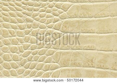 Beige Crocodile Leather Texture