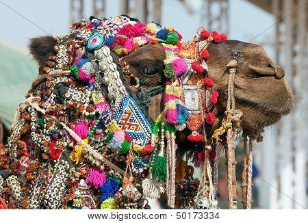 Decorated Camel At The Pushkar Fair. Rajasthan, India, Asia