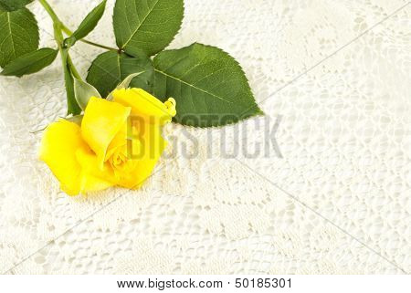 Yellow Rose On Lace