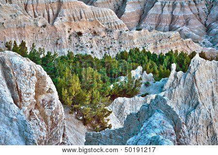 Hdr Badlands Forest