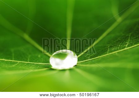 Gota de agua en macro verde hoja capuchina