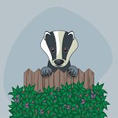picture of badger  - Cute badger standing up over somebody - JPG
