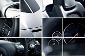 foto of steers  - Modern Cars Mosaic  - JPG