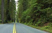stock photo of redwood forest  - Deep Redwood Forest Road  - JPG