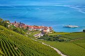 picture of cluster  - Vineyards of the Lavaux region over lake Leman  - JPG