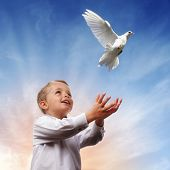 stock photo of forgiveness  - Boy releasing a white dove into the air concept for freedom - JPG