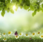 image of spring-weather  - Spring or summer season abstract nature background with grass and blue sky in the back - JPG