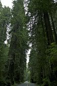 stock photo of redwood forest  - Redwood National Park Road - JPG