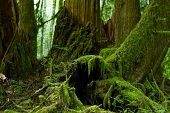 stock photo of rainforest  - Mossy Forest Details  - JPG