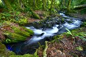 picture of olympic mountains  - Rainforest Creek  - JPG