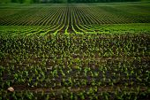 stock photo of farm land  - Corn Fields  - JPG