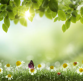 stock photo of spring-weather  - Spring or summer season abstract nature background with grass and blue sky in the back  - JPG