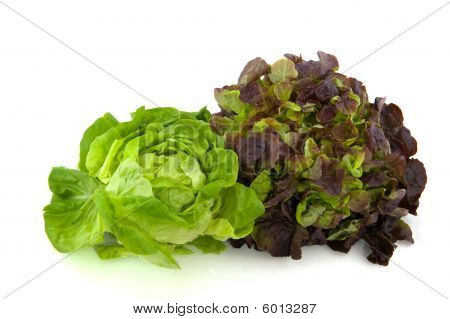 Lettuce Assortment