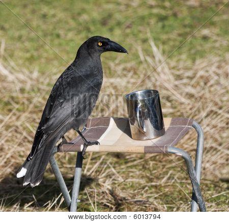 bird with camping mug