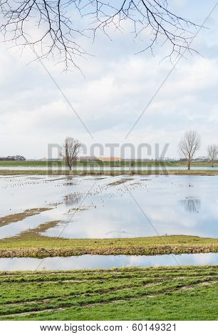Flooded River Bank With Gulls